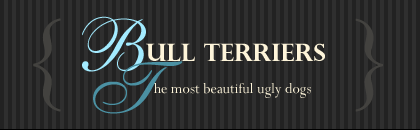 The Most Beautiful Ugly Dogs logo